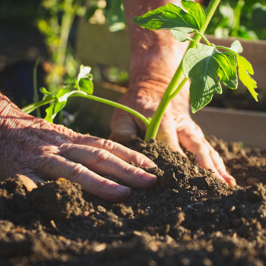 Good Life over 50s lifestyle resort Community Vegetable Garden